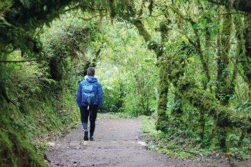 Natural History Walk