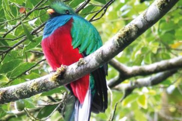 Monteverde Bird Watching