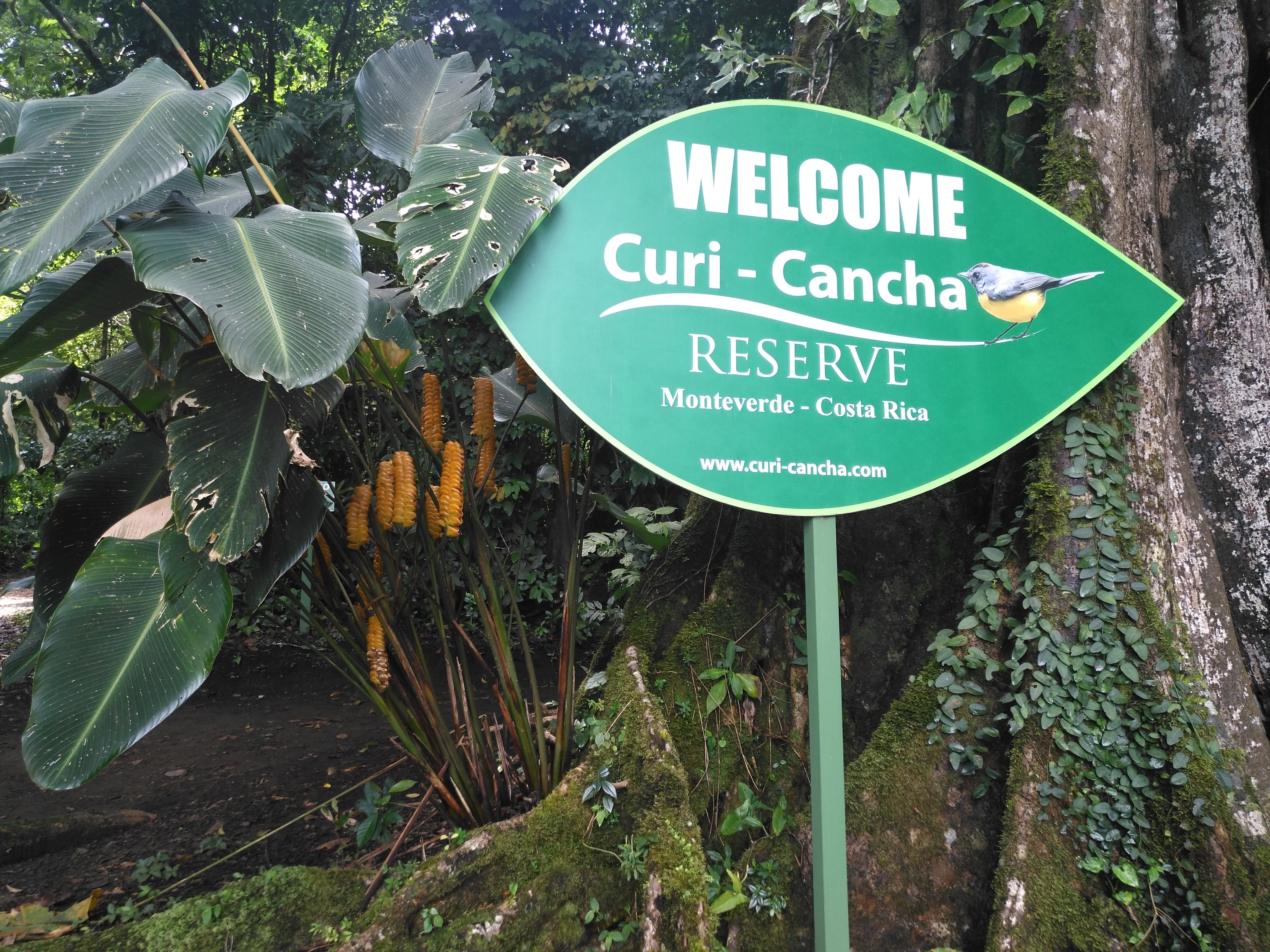 Entrance to curi-cancha reserve