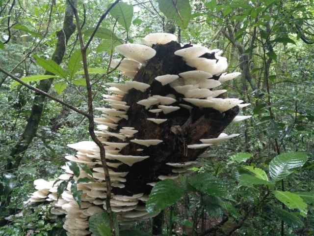 Mushrooms on log tree