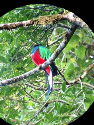 The Quetzal during the Bid Watching tour