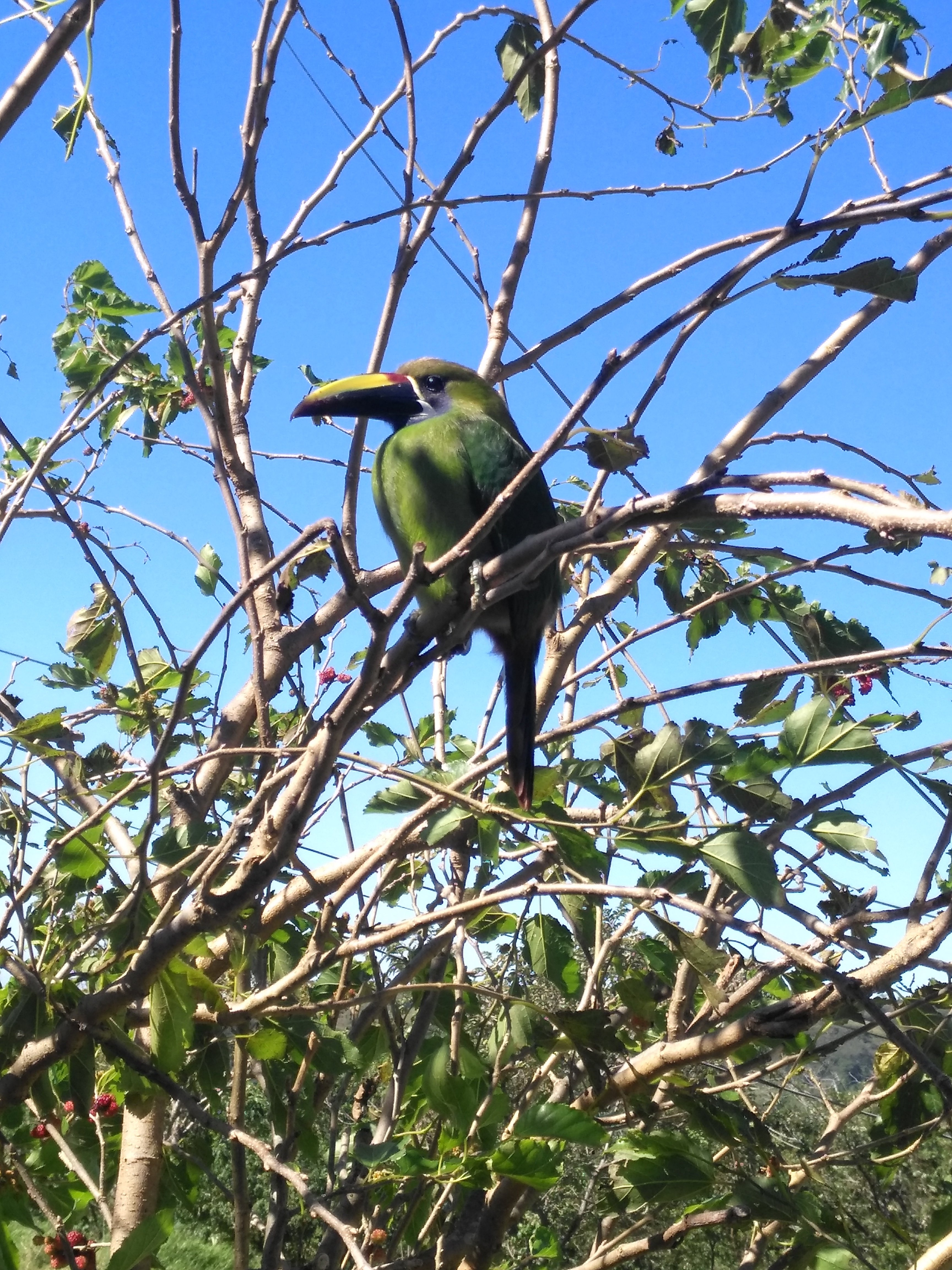 A green toucan on a bird watching tour